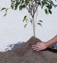 ¿Por qué plantar iglesias?